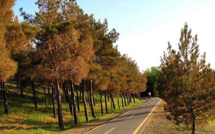 پارک جنگلی تلو