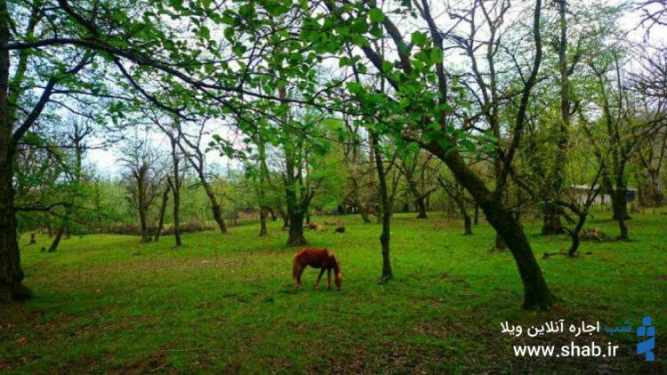 اقامت در کلبه های جنگلی در روستای فلکده