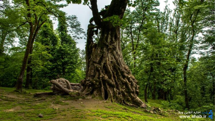 بهشتی به نام شفت در دل جنگلهای نزدیک رشت