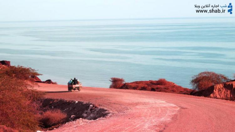 سحال سرخ در جزیره هرمز