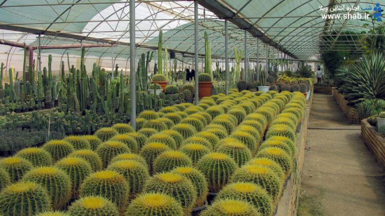 گلخانه های محلات جاذبه گردشگری محلات