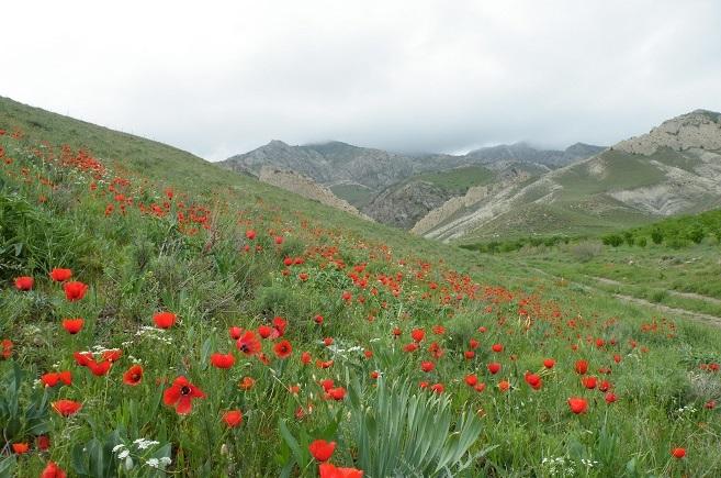 ییلاقات پر از گل های لاله سرخس