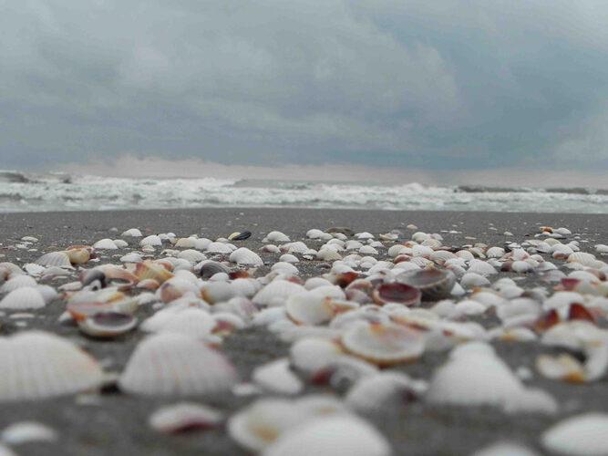 ساحل صدف، زیباترین ساحل شمال کشور