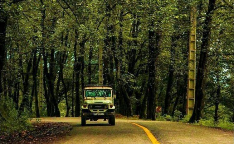 جنگل دالخانی در نزدیک رامسر و تنکابن
