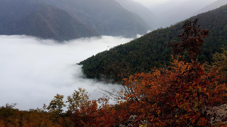 جنگل دالخانی، زیباترین جنگل خطه شمال