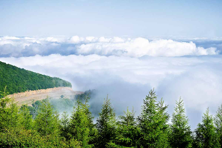 جنگل ابر جاذبه گردشگری شاهرود