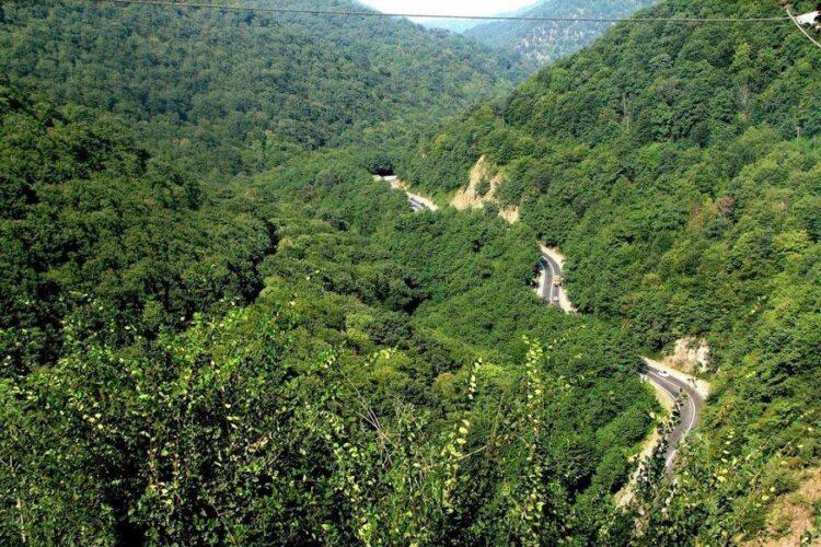 جنگلهای لوندویل
