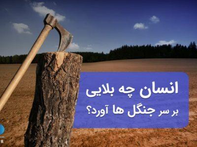 آمار نابودی و تخریب جنگل ها